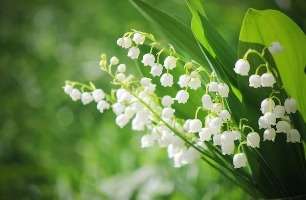 Lírios florescendo no buquê. foco seletivo.