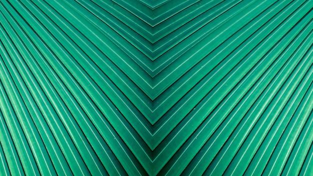 Listras verdes da cerceta abstrata da natureza, fundo em folha de palmeira tropical.