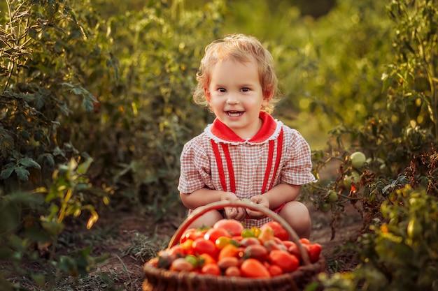 Litlle criança (menina) leva o vegetal (tomate) em um dia ensolarado em um jardim