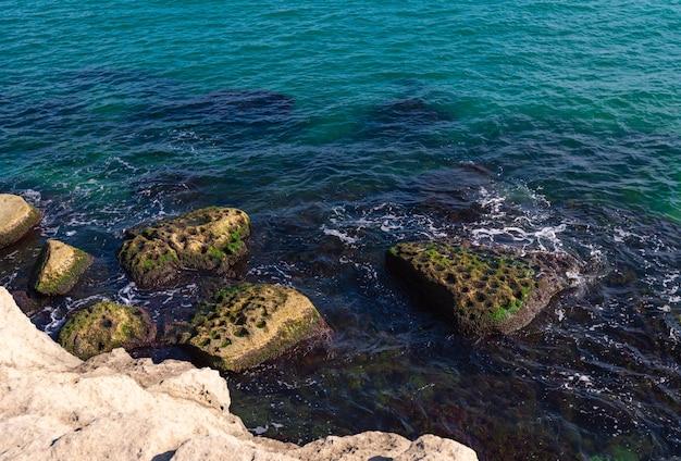 Litoral rochoso com pedras cobertas de algas verdes
