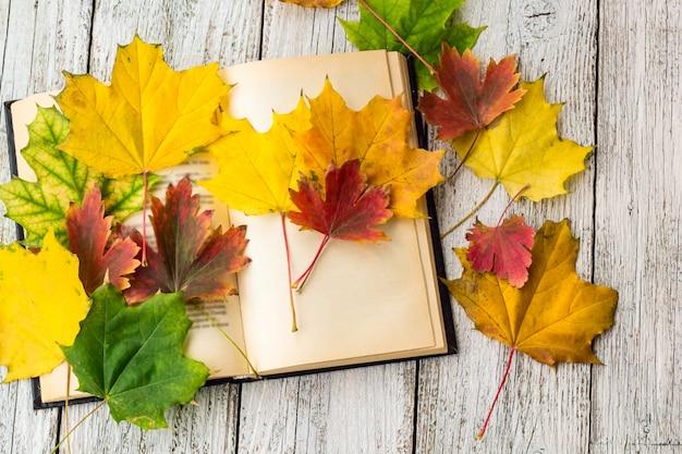 Livro aberto e folhas de bordo coloridas sobre fundo branco de madeira