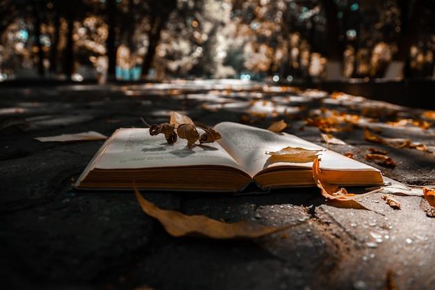 Livro aberto no chão com folhas