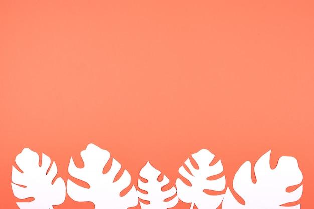 Livro branco, monstera, folhas, ligado, coral