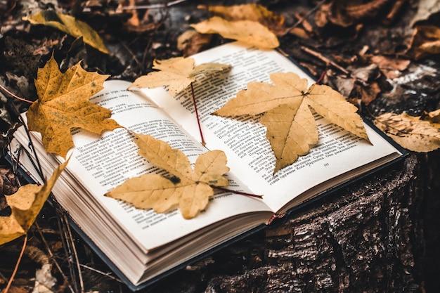 Livro e folhas de outono