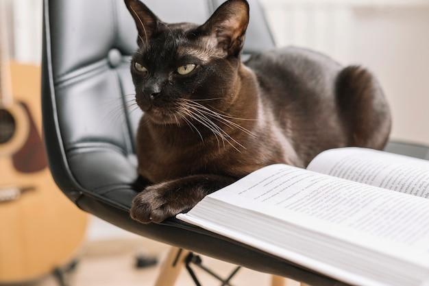 Livro na cadeira perto de gato