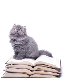 Livros e gatinho pequeno bonito