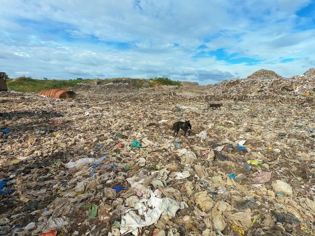 Lixo no aterro municipal para lixo doméstico