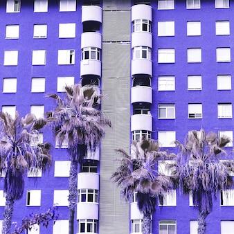 Localização de palmeiras tropicais. viajar por. ilhas canárias. vibrações roxas