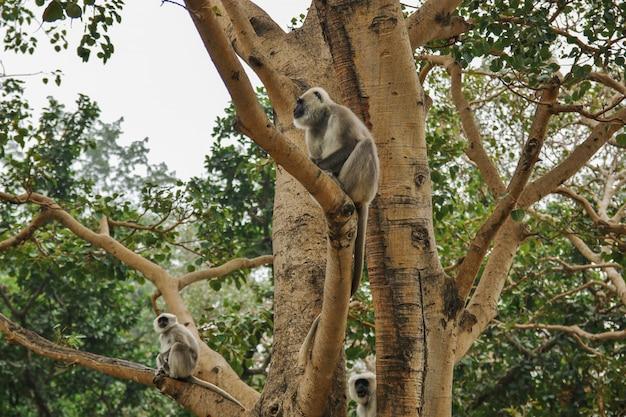 Localização do macaco na árvore