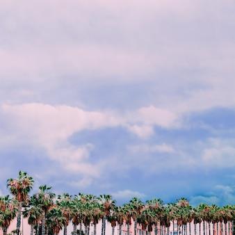 Localização tropical. palma mínima da moda. ilhas canárias
