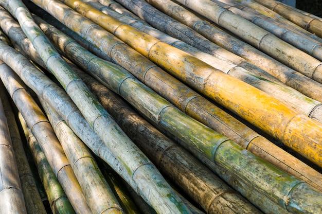 Log de bambu asiático