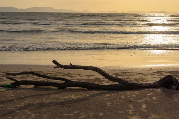 Log inoperante da árvore em uma praia arenosa com fundo do por do sol