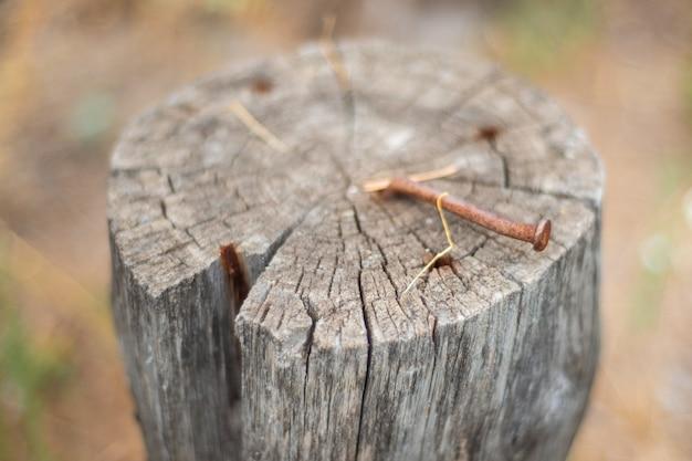 Log para sentado close-up com um prego enferrujado. coto na floresta