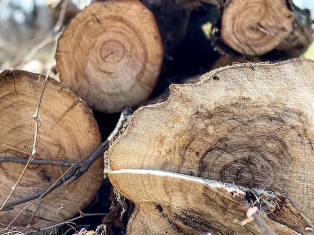 Logs empilhados em um close-up de pilha em um corte na floresta.