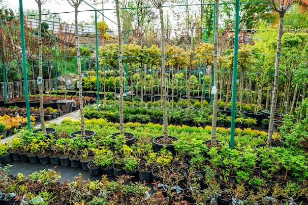 Loja de produtos de jardim. uma linha de plantas