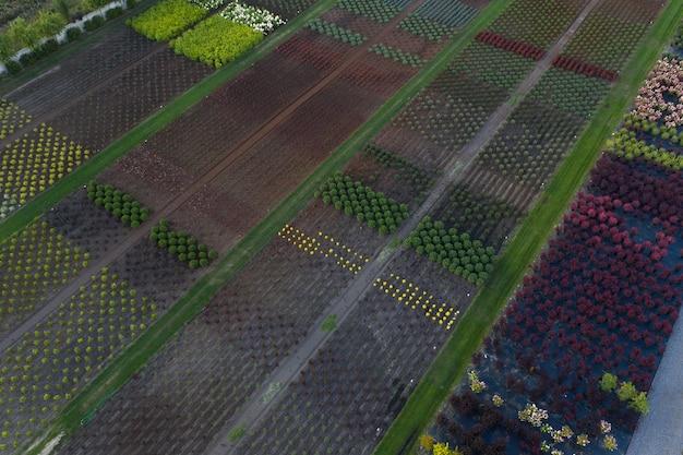 Loja ou viveiro de plantas ornamentais. visão de drone
