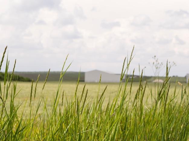 Long shot paisagem com uma casa sem foco