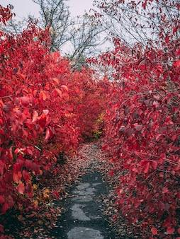 Longa avenida com folhas vermelhas brilhantes