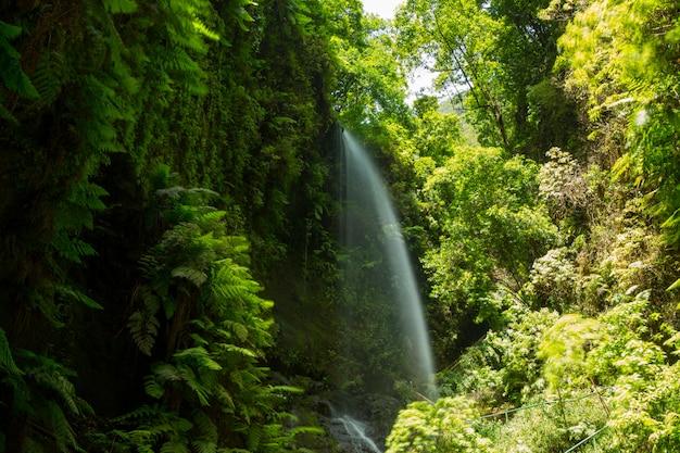 Los tilos cascata laurisilva em la palma floresta de louro