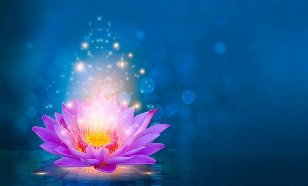 Lotus pink roxo luz flutuante brilho roxo fundo