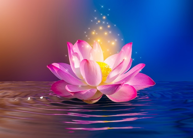 Lótus rosa claro roxo flutuante luz brilhante fundo roxo