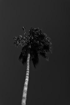 Low key palm