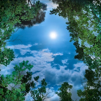 Lua através das folhas das árvores à noite com céu claro e escuro