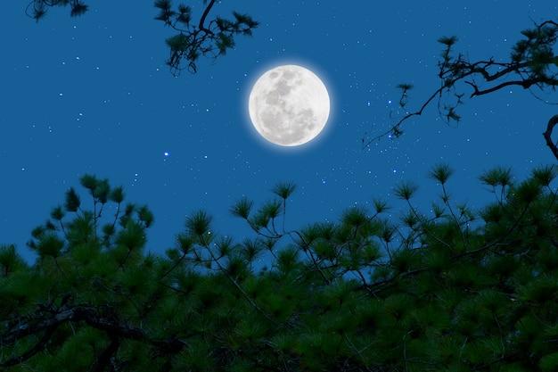 Lua cheia com estrelado sobre ramos de pinheiro. noite romântica.