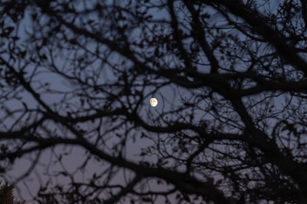 Luar através dos galhos de uma árvore