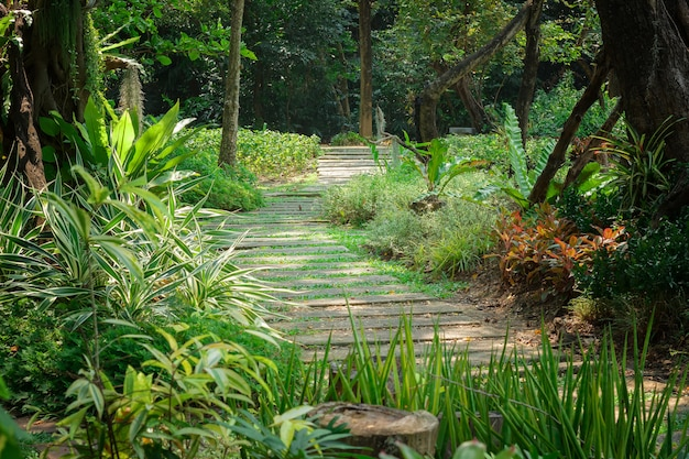 Lugar de descanso, jardim, floresta