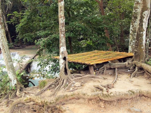 Lugar de piquenique na floresta