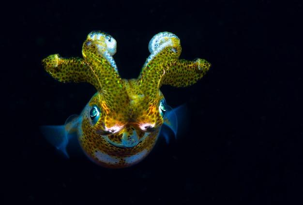 Lula no meio da noite incrível mundo subaquático das filipinas