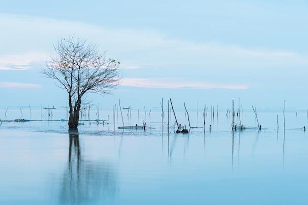 Lumphu no lago