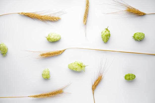 Lúpulo e ramos de trigo isolados no branco