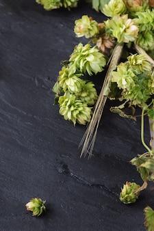 Lúpulo verde e espigas de cevada
