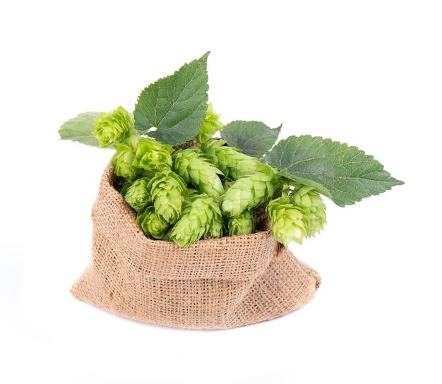 Lúpulos verdes frescos no saco de serapilheira com o ramo, isolado no fundo branco.