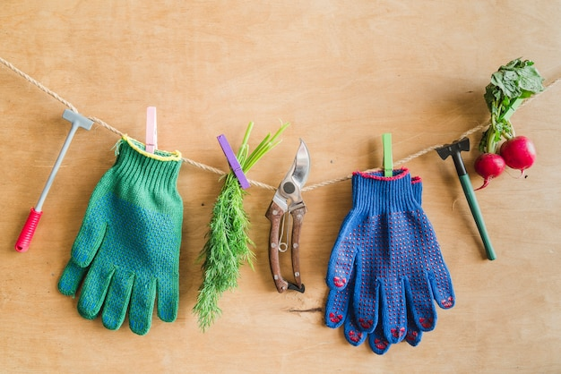 Luvas de jardinagem; ferramentas; endro colhido; nabo pendurado na corda com pregador contra a parede de madeira