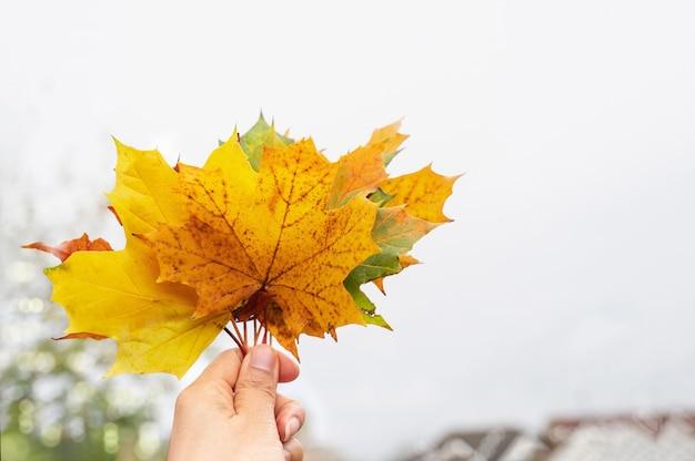 Luz alta da mão segurando folhas de outono contra o céu branco