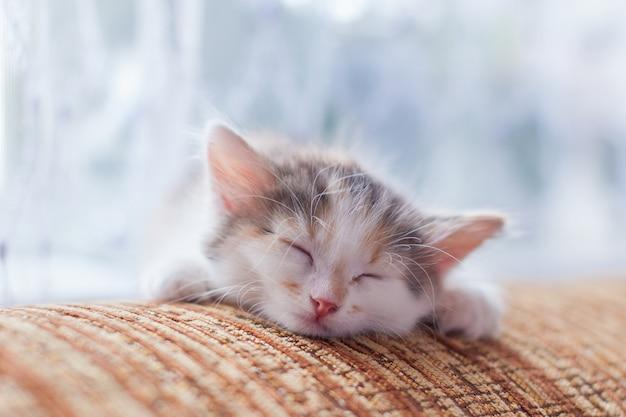 Luz bonito do gatinho - cor azul que dorme, close-up.