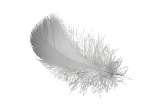 Luz cinza fofo pena isolada em um fundo branco. pena flutuando no ar.