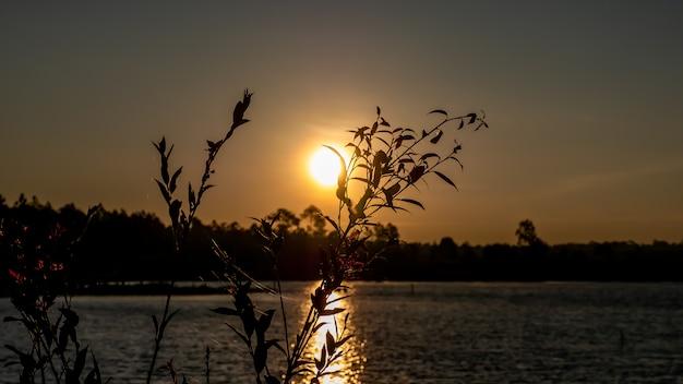 Luz do sol atrás das flores de grama ao nascer do sol