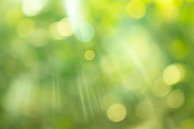 Luz do sol brilhando através das folhas das árvores, fundo desfocado natural, abstrato da natureza, natureza verde bokeh