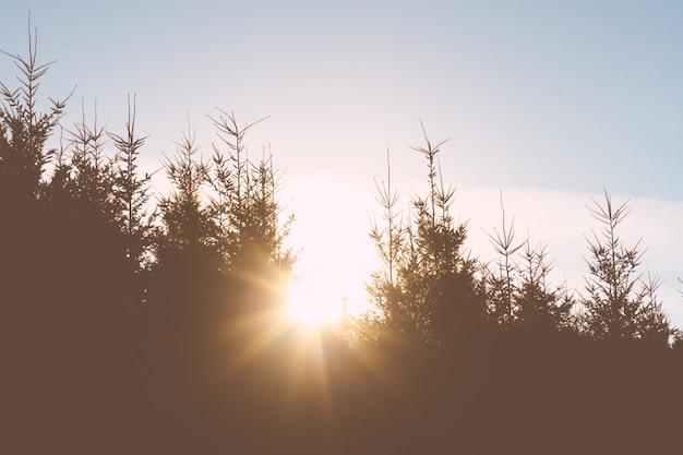 Luz do sol brilhando através de árvores