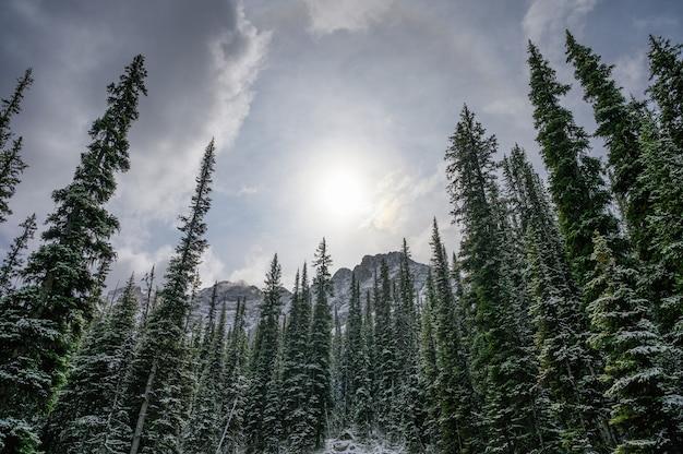 Luz do sol na floresta de pinheiros coberta de neve com montanha no parque nacional no inverno