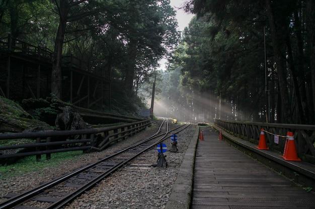 Luz do sol na floresta na estrada de ferro na linha alishan, taiwan