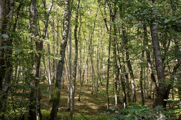 Luz do sol na floresta verde, tempo de outono