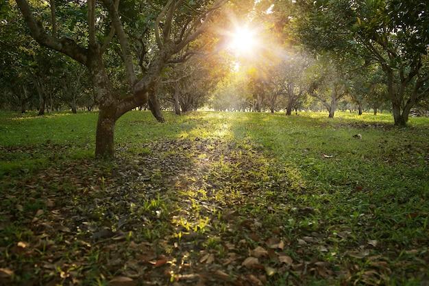 Luz dourada da hora na floresta verde, foco seletivo e profundidade de composição muito rasa do campo.