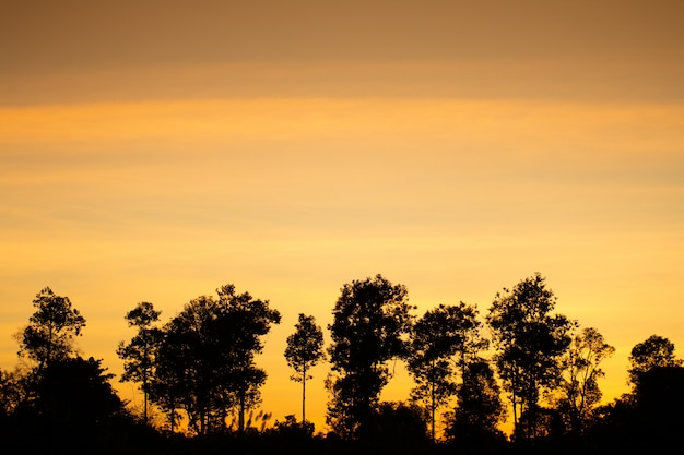 Luz dourada do efeito do nascer do sol e fundo de campo