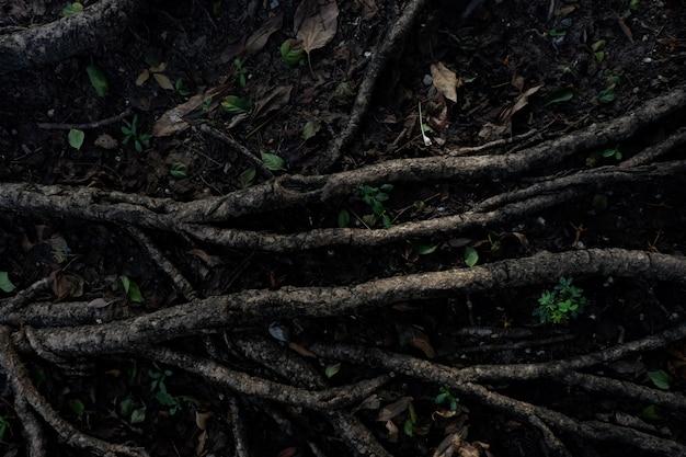 Luz e sombra de banyan tree raizes no chão da floresta para o fundo da natureza