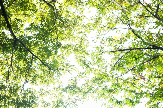 Luz que brilha através da árvore
